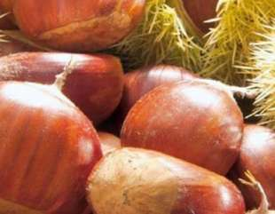 La castagna del Cilento: frutto da valorizzare